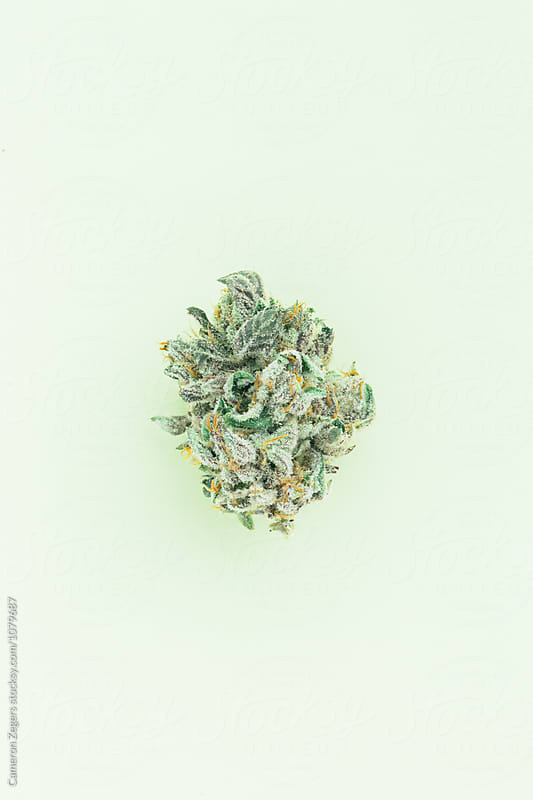 marijuana bud on pastel green background by Cameron Zegers for Stocksy United