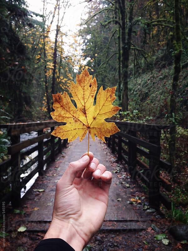 holding golden hour in forest park by ian pratt for Stocksy United