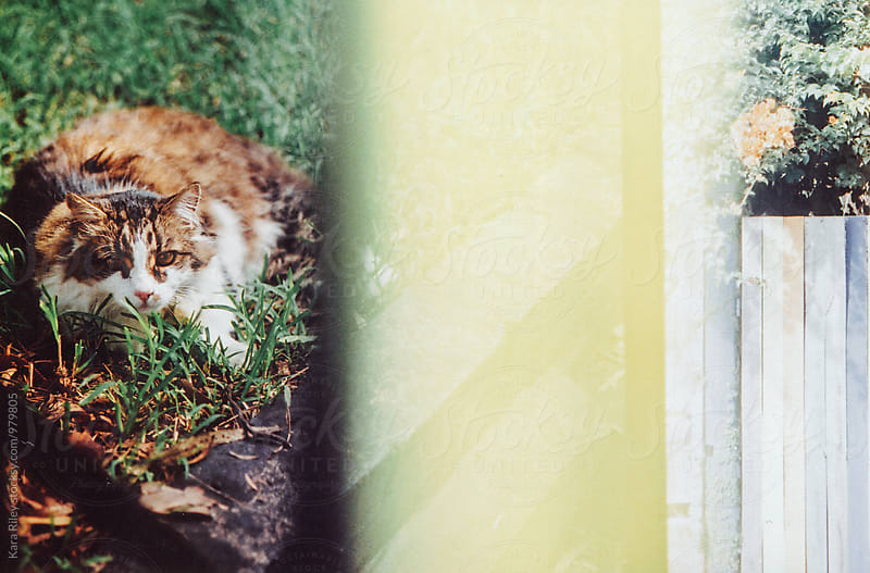 Cat lying on the grass by Kara Riley for Stocksy United