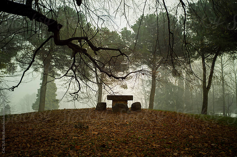 Stone table and chairs in the forest. by CACTUS Blai Baules for Stocksy United
