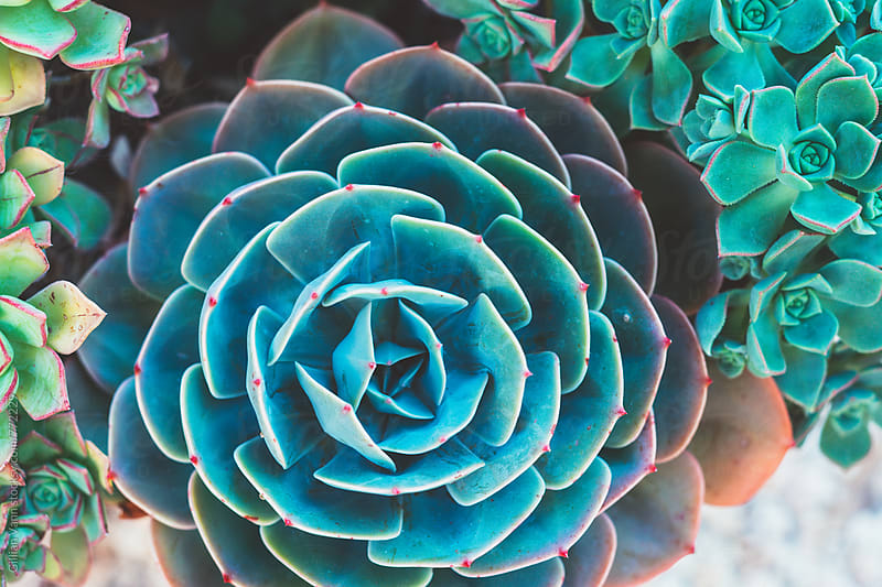 surreal succulent by Gillian Vann for Stocksy United