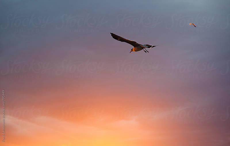 seagull sunset  by Fox & Lemonade for Stocksy United