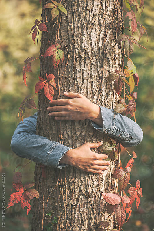Hands of woman embracing a tree. Colorful autumnal leaves. by BONNINSTUDIO for Stocksy United