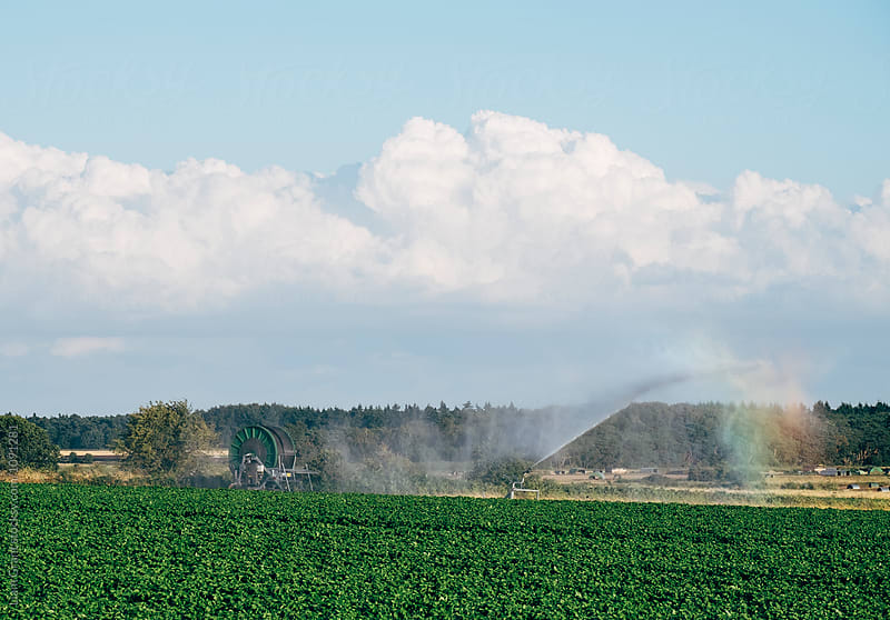 Irrigation system watering a field. Norfolk, UK. by Liam Grant for Stocksy United