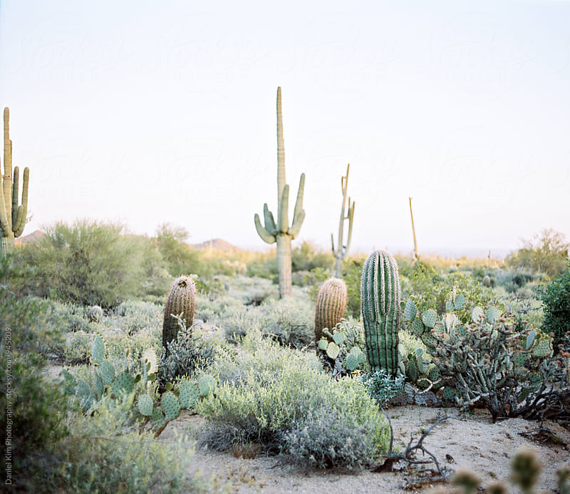 Desert landscape by Daniel Kim Photography for Stocksy United
