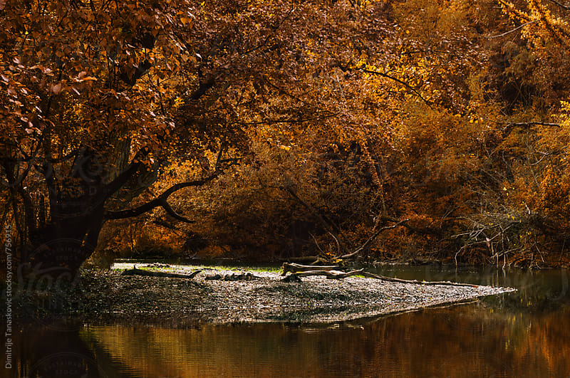 Beautiful autumn forest with orange leaves on the trees by Dimitrije Tanaskovic for Stocksy United