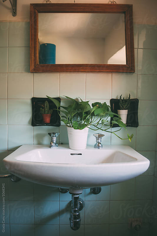 Vintage sink decorated with plants by Giada Canu for Stocksy United