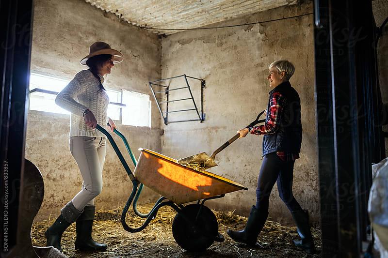 Women farmers working on a farm animal. by BONNINSTUDIO for Stocksy United