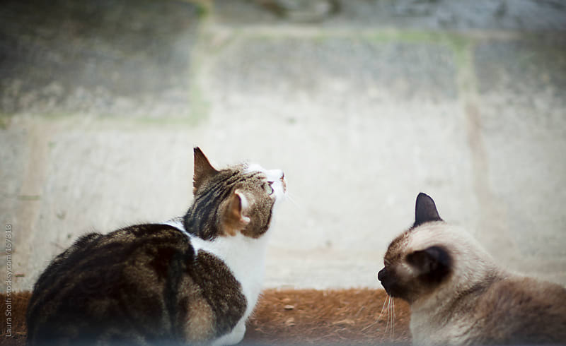Two cats on doormat seen through glass door by Laura Stolfi for Stocksy United