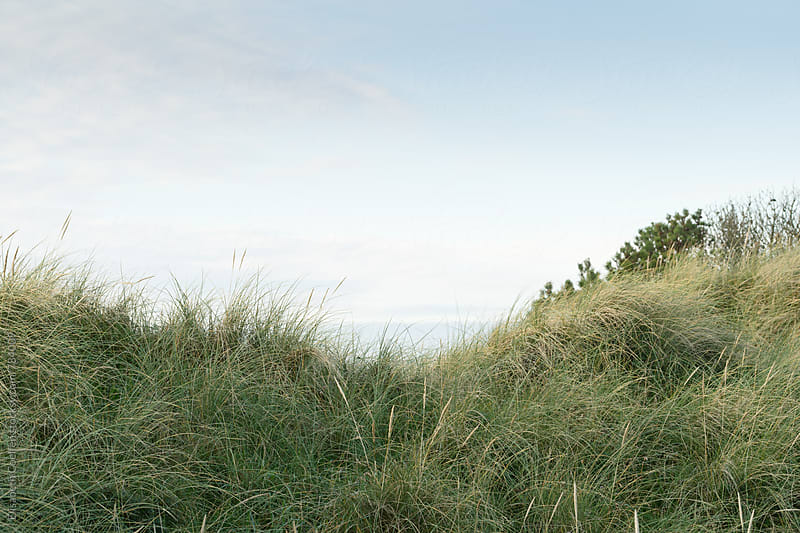Dunes by the north sea beach in Denmark by Elisabeth Coelfen for Stocksy United