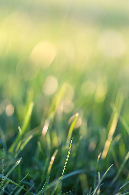 Green grass backround by Jovana Milanko for Stocksy United