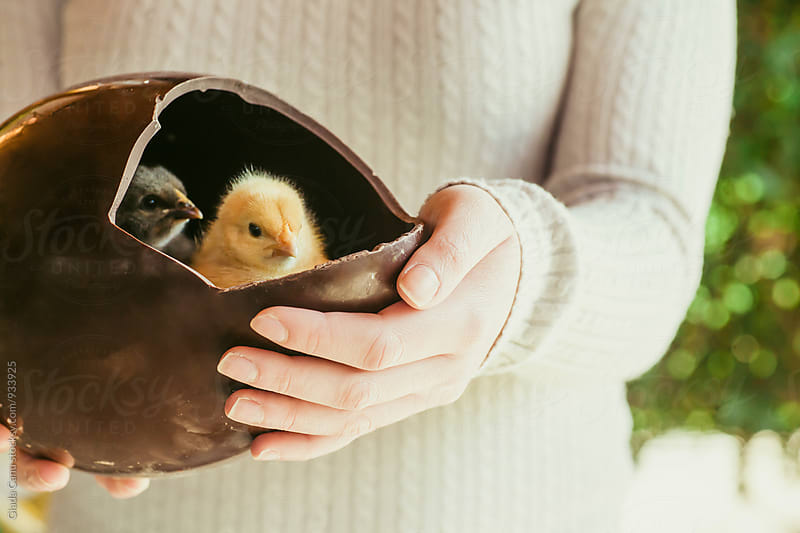 Baby chick inside a chocolate egg by Giada Canu for Stocksy United