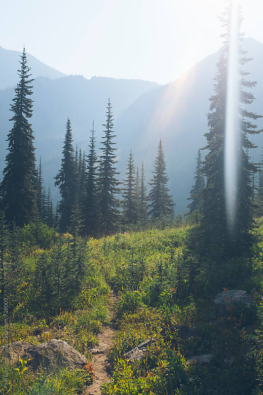 Hiking trail through lush mountain meadow, sunlight shining  by Paul Edmondson for Stocksy United