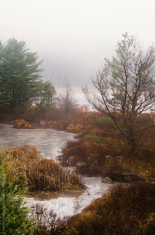 icy pond with fog and pine trees by Deirdre Malfatto for Stocksy United