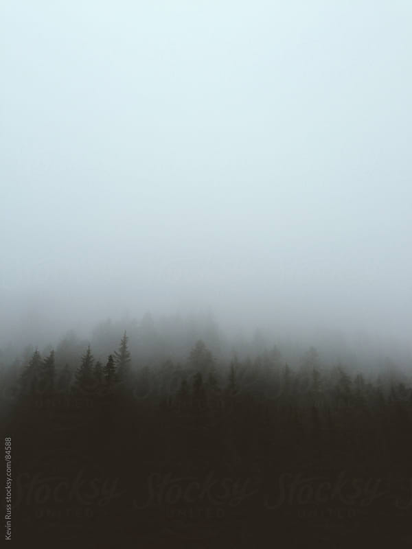 Fog Swallowed Trees by Kevin Russ for Stocksy United