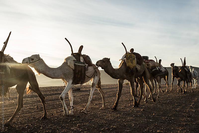 Camel Train by craig ferguson for Stocksy United