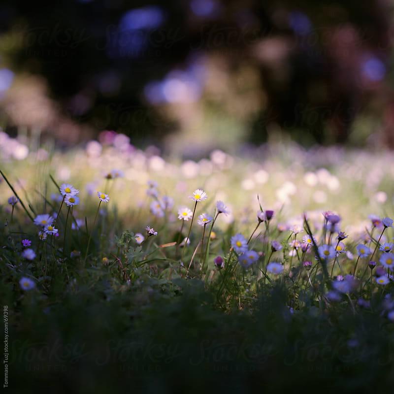 flowery meadow by Tommaso Tuzj for Stocksy United