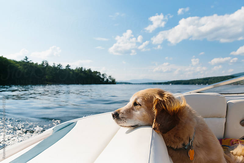 Dog on Boat at Lake Vacation by Raymond Forbes LLC for Stocksy United
