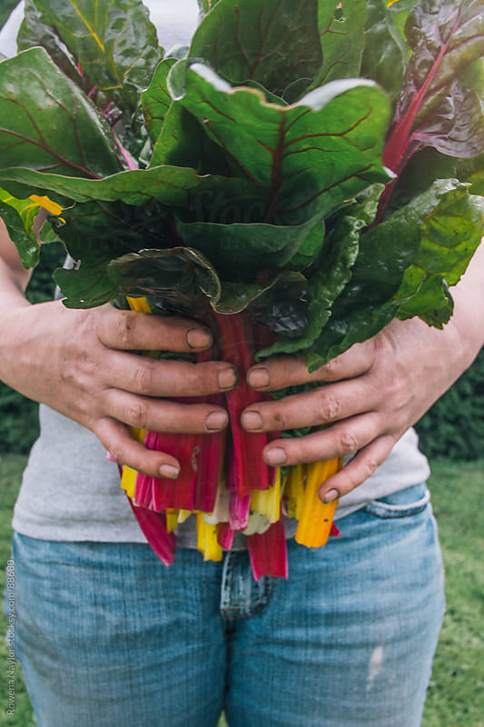 Gardener holding Rainbow Chard by Rowena Naylor for Stocksy United
