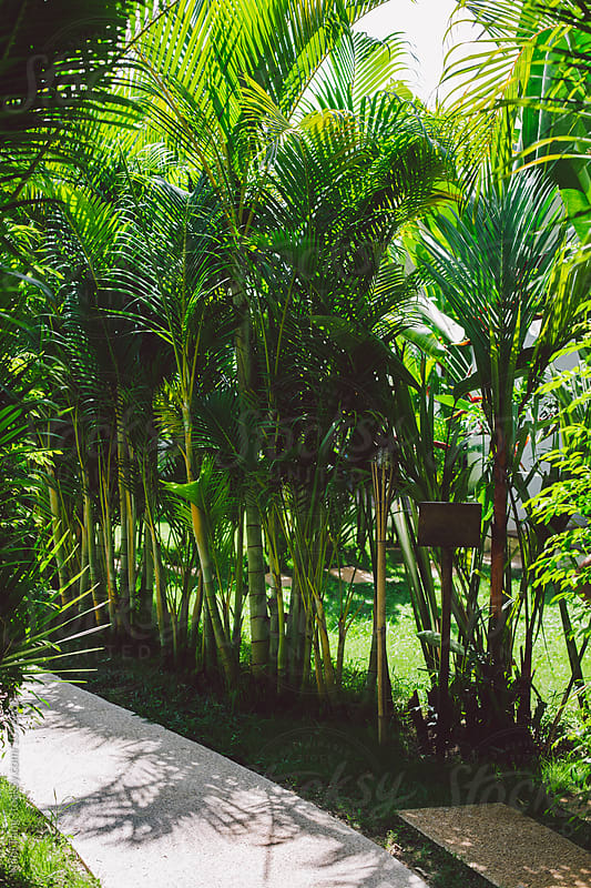 Beautiful tropical garden by Nabi Tang for Stocksy United