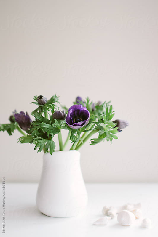 Purple anemones in a white jug on a white table. by Helen Rushbrook for Stocksy United