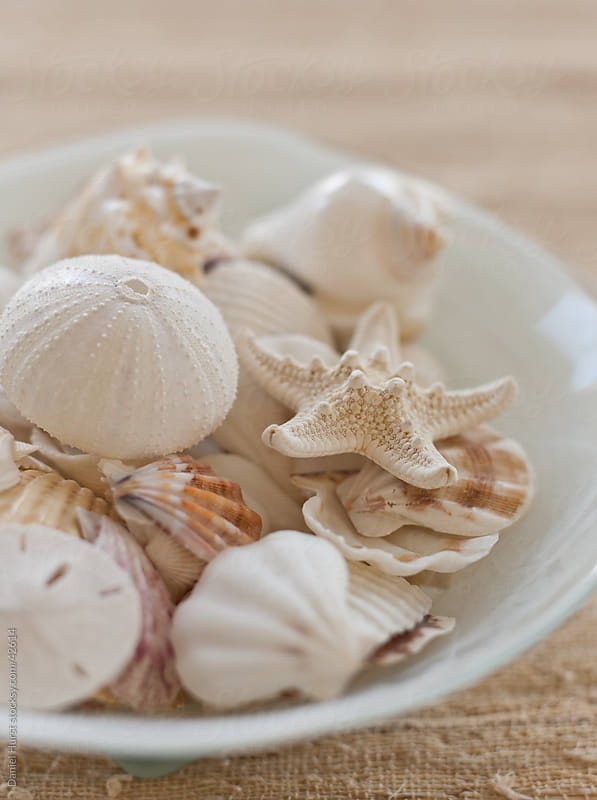 Assortment of shells in bowl by Daniel Hurst for Stocksy United