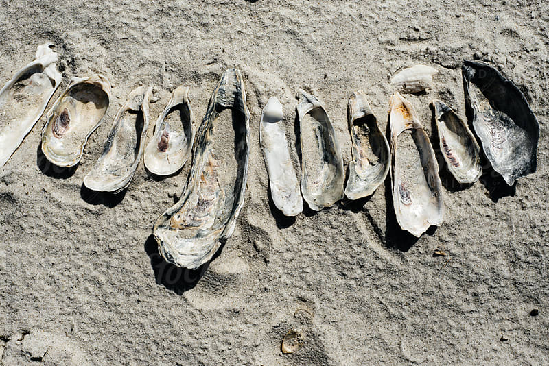 A row of oyster shells left behind on a beach by Cara Dolan for Stocksy United