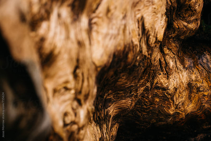 close up shot of tree wood grain texture on drift wood by Jesse Morrow for Stocksy United
