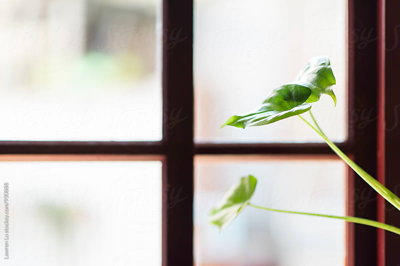 House little green plant against window by Lawren Lu for Stocksy United