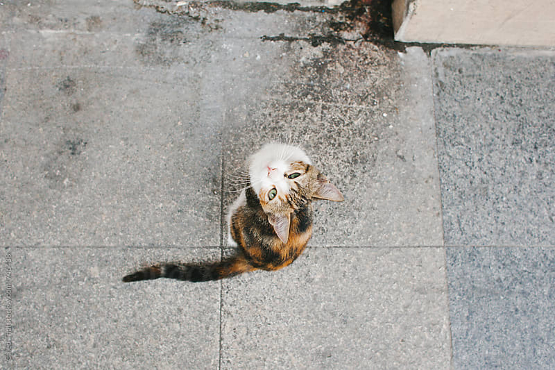 Small Kitten Looking Up by Caleb Thal for Stocksy United