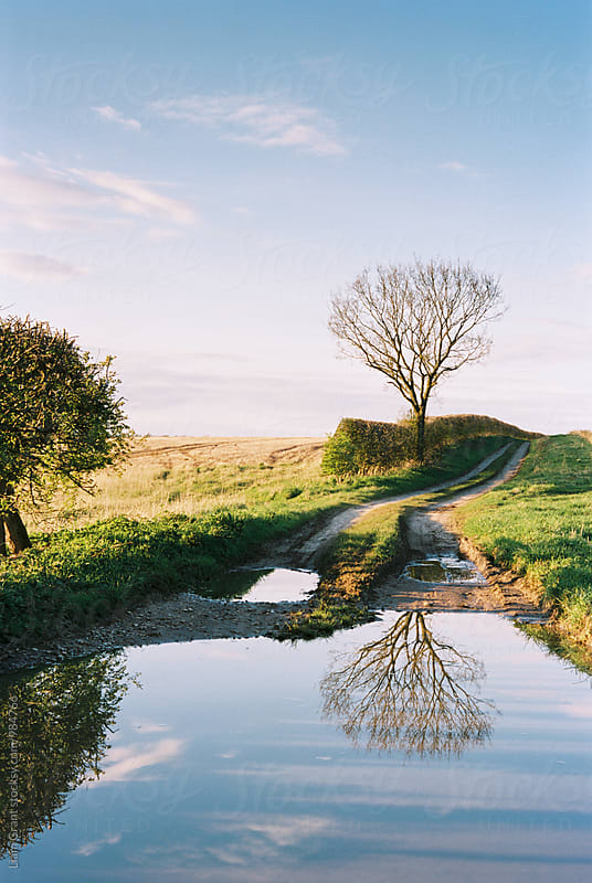 Tree reflected in a puddle along a farm track. Norfolk, UK. by Liam Grant for Stocksy United