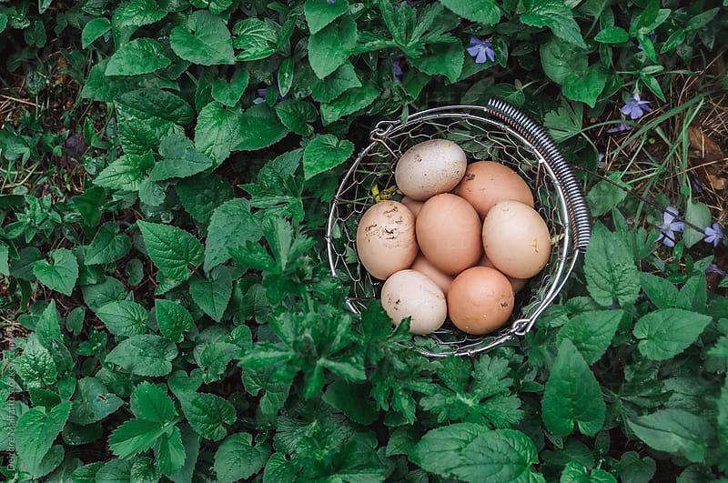 freshly gathered eggs in a basket among violets by Deirdre Malfatto for Stocksy United