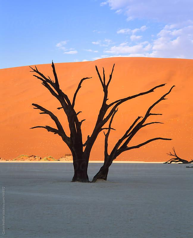 Dead tree and orange sand dunes, Dead Vlei,  Sossusvlei dune field, Namib-Naukluft Park, Namib Desert, Namibia, Africa by Gavin Hellier for Stocksy United
