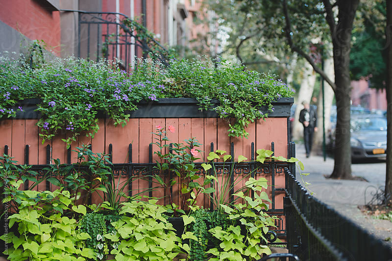 Garden and greenery on pretty residential block by Lauren Naefe for Stocksy United