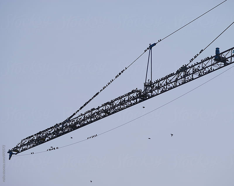 Black birds on building crane by rolfo for Stocksy United