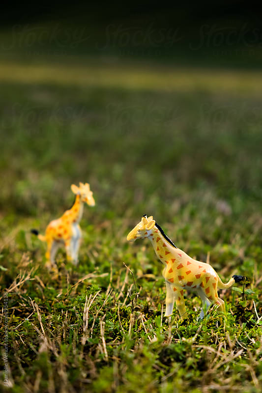 Miniature Plastic Toy giraffe in grass by J Danielle Wehunt for Stocksy United