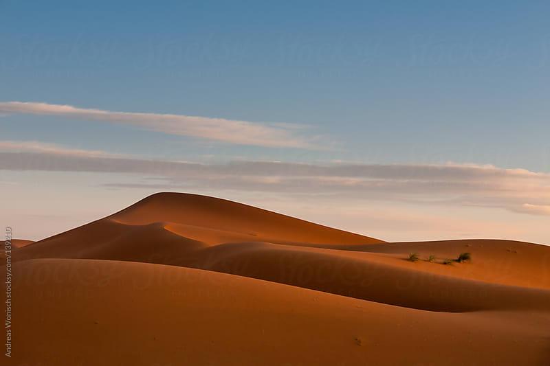 Desert Sand DUnes just before Sunrise by Andreas Wonisch for Stocksy United
