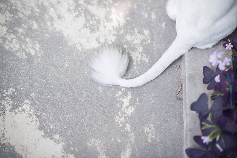 Shaved white cat tail on floor of yard with purple flower plant by Lawren Lu for Stocksy United