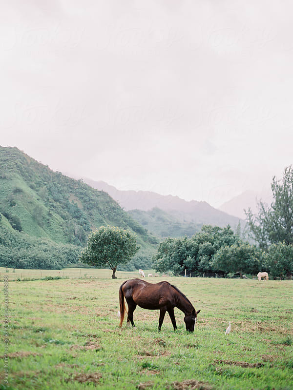 horses in an open field by Daniel Kim Photography for Stocksy United