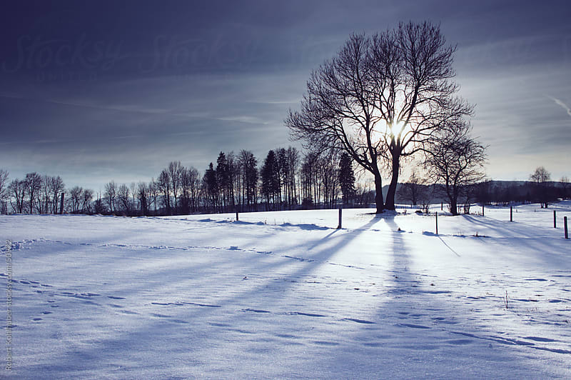 Winter tree in snow landscape by Robert Kohlhuber for Stocksy United