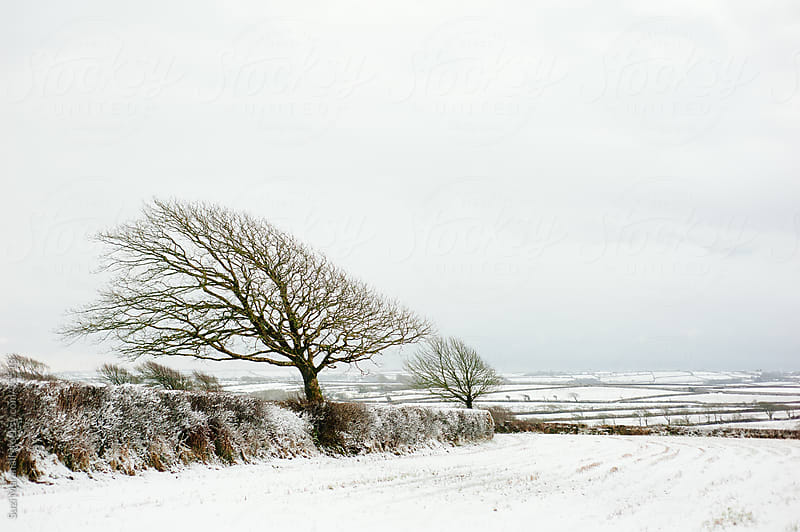 Tree and fields covered in snow by Suzi Marshall for Stocksy United