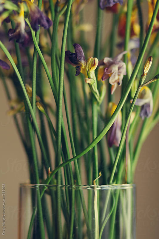 Vase of dried freesia flowers by Kerry Murphy for Stocksy United