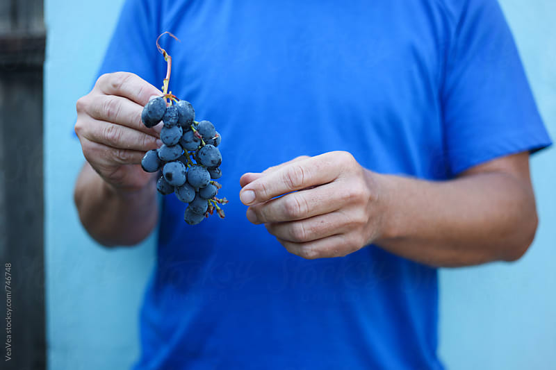 Male hands holding a cluster of red grapes by Marija Mandic for Stocksy United