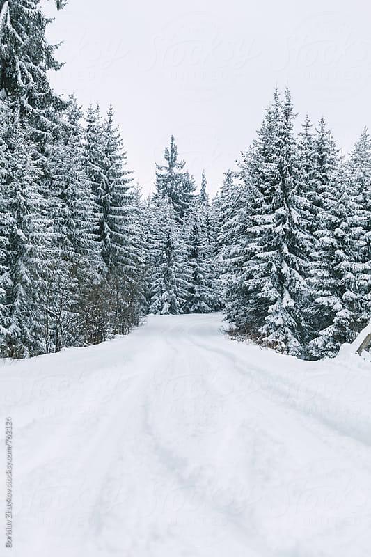 Road Through Winter Forest by Borislav Zhuykov for Stocksy United