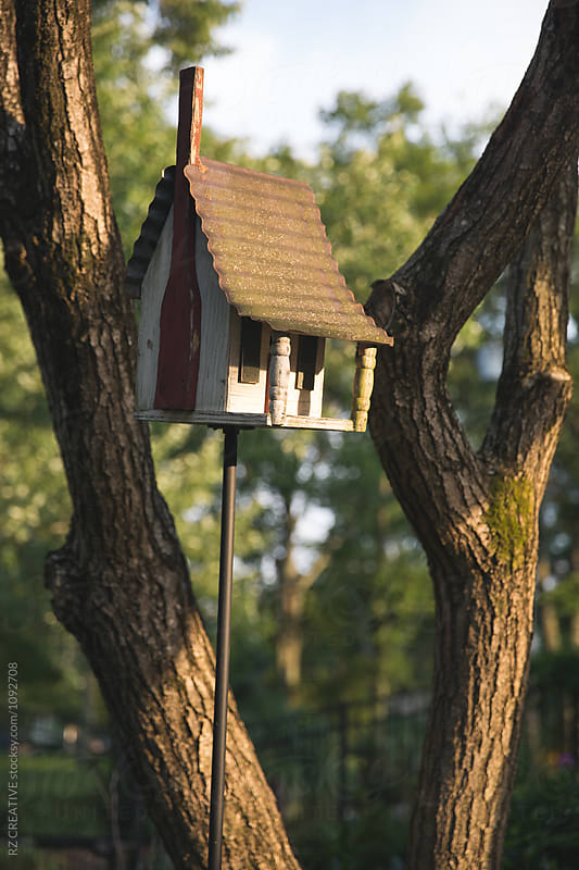 Backyard birdhouse at sunset.  by RZ CREATIVE for Stocksy United
