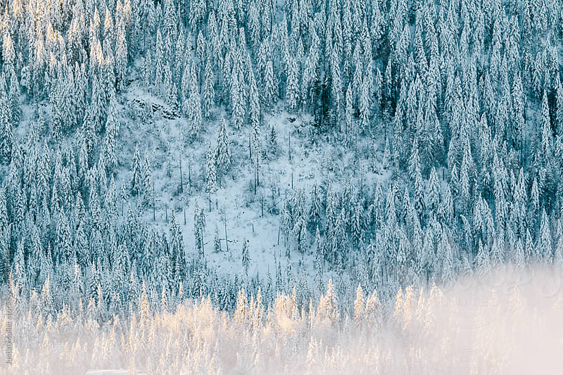 Snow covered evergreen trees on a mountain side by Justin Mullet for Stocksy United