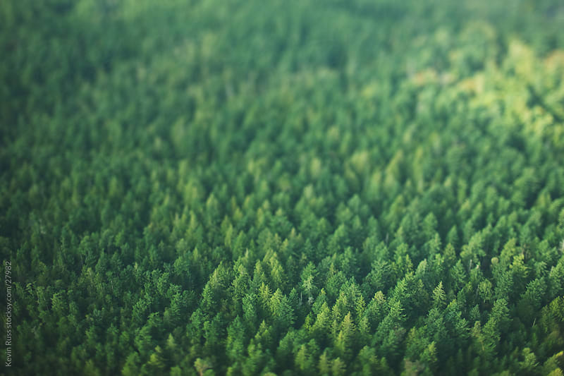 Thick Tilt-Shifted Forest by Kevin Russ for Stocksy United