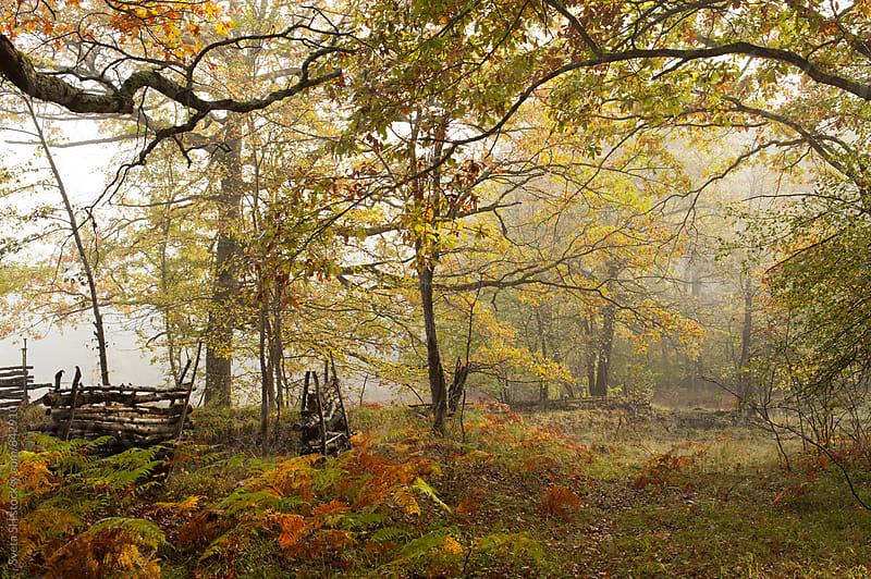 Autumn landscape by Svetlana Shchemeleva for Stocksy United