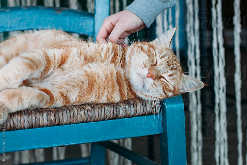 Cat sleeping on a chair.  by Beatrix Boros for Stocksy United