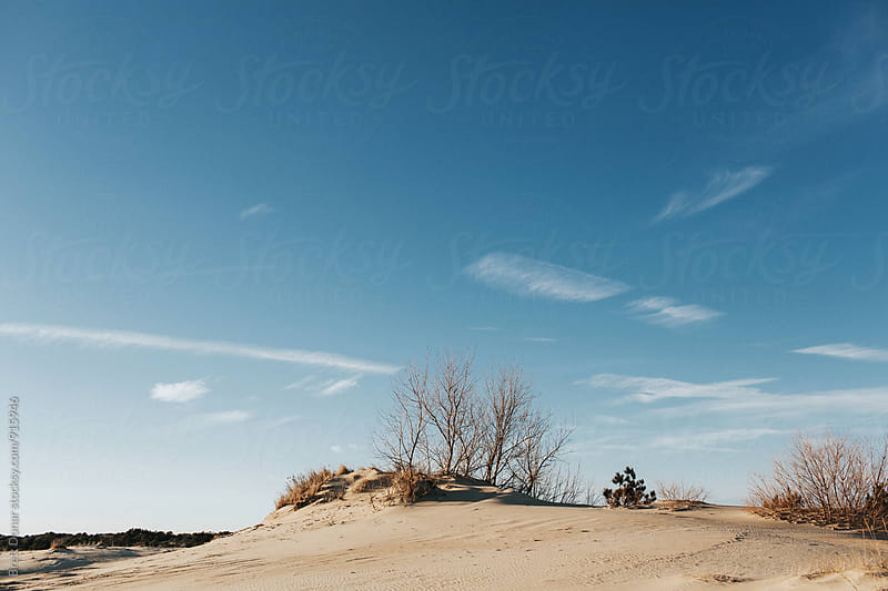 Jockey's Ridge Sand Dunes by Brett Donar for Stocksy United